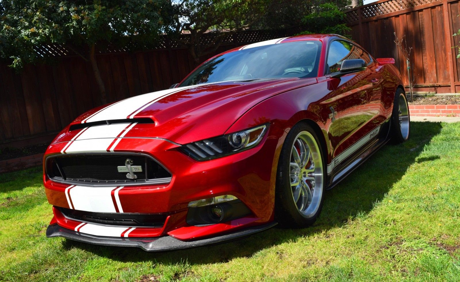 Amazing 2015 Ford Mustang Shelby Super Snake Coupe Ford Shelby Super ...